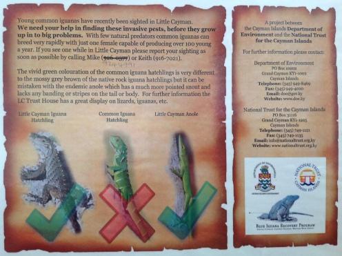 Iguana Factsheet (2)